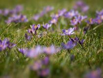 Spring Flowers by Maciej Markiewicz