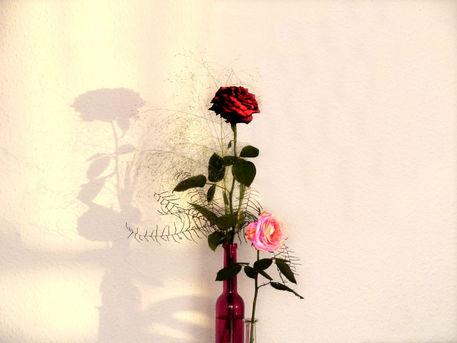 Rose-ch-druck-001
