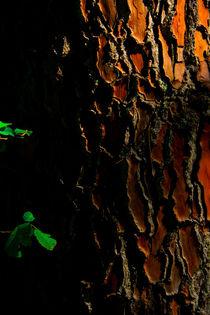 Dark side of the tree von aymeric bein