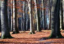 ...im letzten Herbstkleid von © Ivonne Wentzler