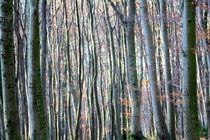 ...auch Natur kann abstrakt by © Ivonne Wentzler