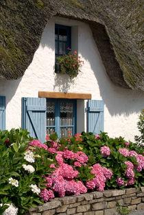 Hydrangeas before thatched cottage- Hortensien vor Haus mit Rieddach von Ralf Rosendahl