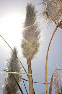 Gräser von Katrin Lantzsch