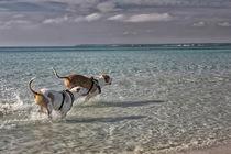 Ein Tag am Meer von Katrin Lantzsch