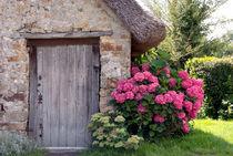 Hydrangeas and wooden door - Hortensien und Holztür by Ralf Rosendahl
