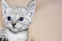 Babykatze by Katrin Lantzsch
