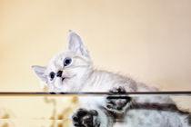 Baby Cat von Katrin Lantzsch