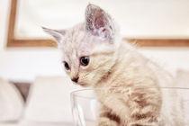 Babycat von Katrin Lantzsch