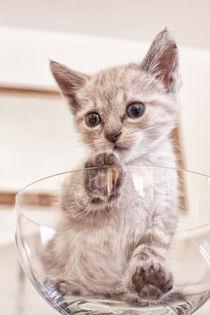 Neugierige Babykatze by Katrin Lantzsch