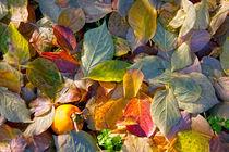 Autumn colors by Raffaella Lunelli