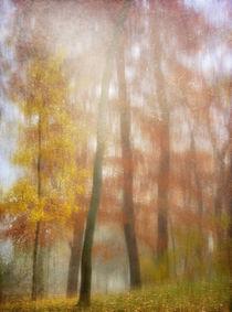 der letzte Rest Farbigkeit von Franziska Rullert