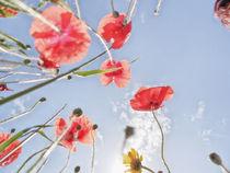 Blumenwiese 2 von Katrin Lantzsch