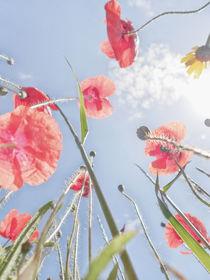 Blumenwiese 1 von Katrin Lantzsch