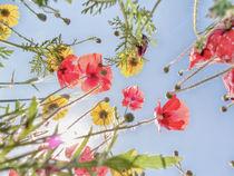 Blumenwiese 3 von Katrin Lantzsch
