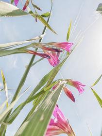 Blumenwiese 4 von Katrin Lantzsch
