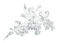 Octoroots von saskia hampton