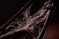 Spider web by Mihai Cîmpan