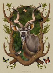 Kudu by Fernando Ferreiro