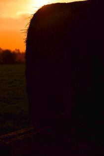 Strohballen im Morgenrot von Mandy Siemon