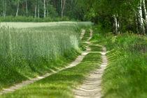 Birch alley von photogatar