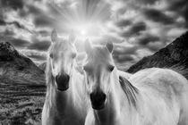 Wild-horsesbw
