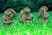 """Die drei Affen """"Sehen, Hören, Sprechen"""" von aidao"""