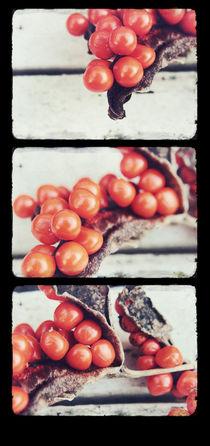 Seed Pods Triptych von Sybille Sterk