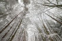Winterwald 2 von Thomas Joekel
