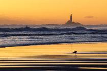 Bird on the beach. von Mark Aynsley