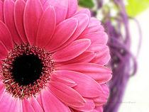 pink detail in focus by Jacqueline Schreiber