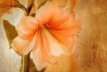Orange auf Holz von fraudoktor