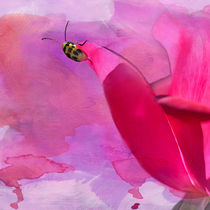 Beetle on a Rose Petal von Betty LaRue
