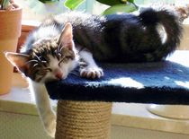 Katzenschlaefchen