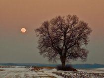 Moon Tree by aidao