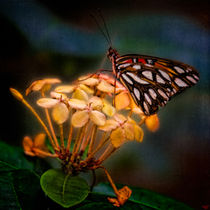 Tropical Butterfly von Chris Lord