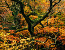 Woodland Autumn Colour von Craig Joiner