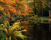 River Through Woodland Autumn Colours von Craig Joiner