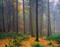 Misty Autumn Forest von Craig Joiner