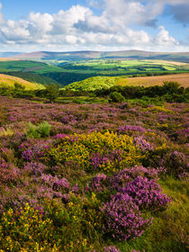 Porlock Common, Exmoor, England by Craig Joiner
