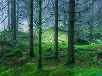 Moss Carpeted Forest von Craig Joiner