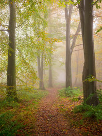 Pathway Through A Misty Woodland by Craig Joiner