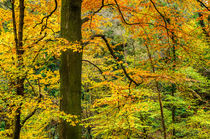 Autumn Colour by Craig Joiner