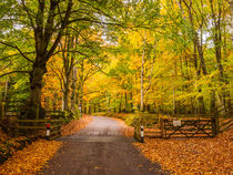 Country Lane Through Autumn Woodland von Craig Joiner