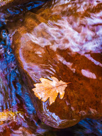 Leaf in Horner Water von Craig Joiner