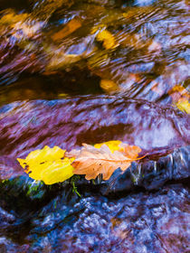 Leaves in Horner Water by Craig Joiner