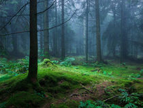 Pathway Through A Misty Forest von Craig Joiner
