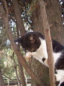 100-9837-slyvester-in-tree