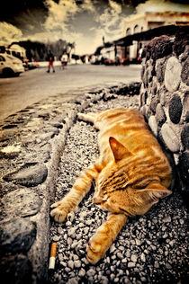 alley cat siesta in grunge von meirion matthias