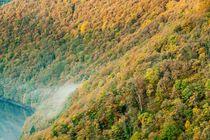 Autumn Trees 4 by Maciej Markiewicz