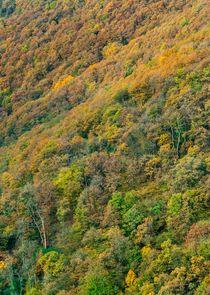 Autumn Trees 3 by Maciej Markiewicz